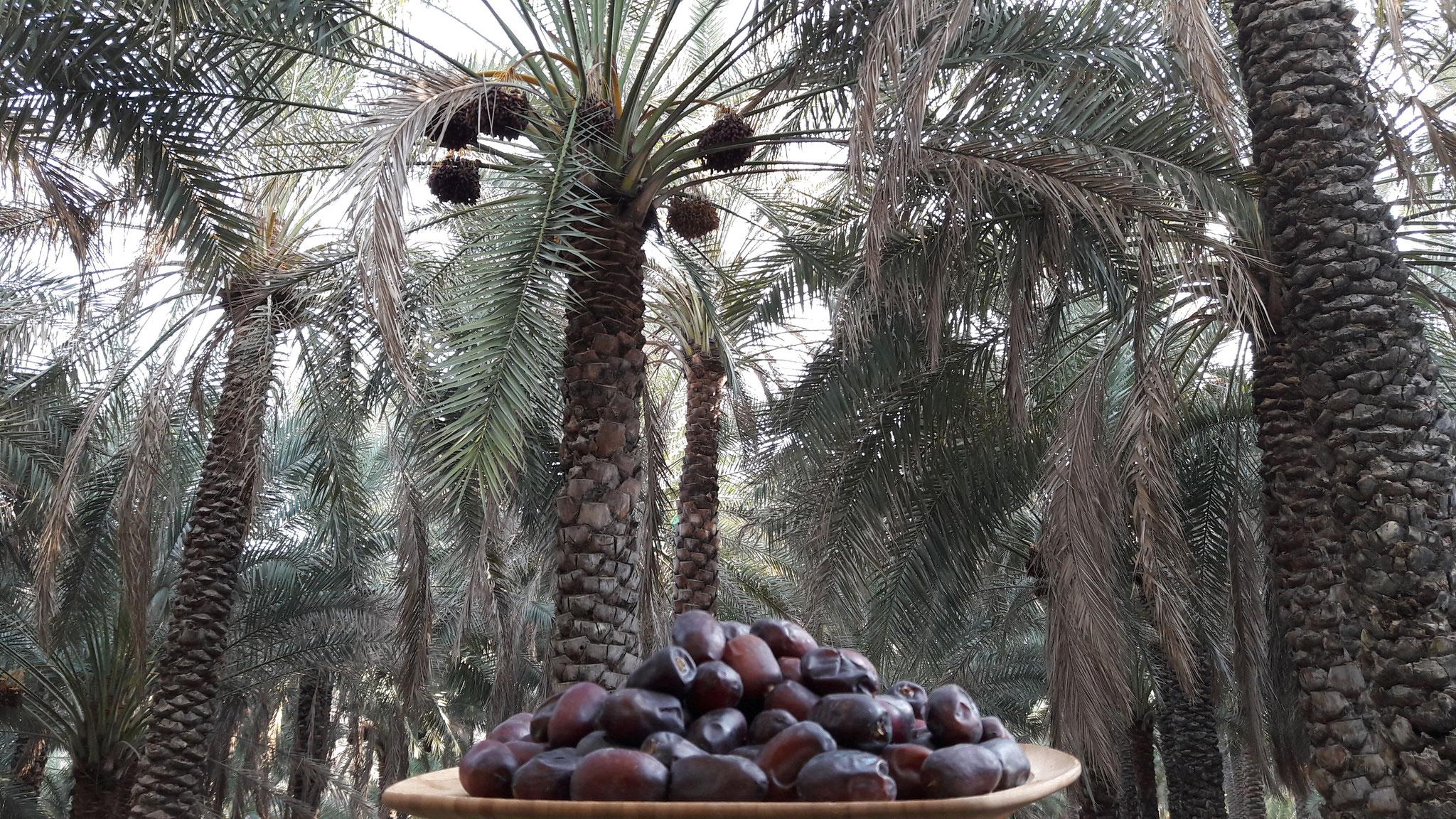 mazafati dates in bam iran