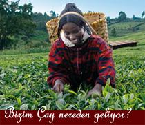 alamir tea cup